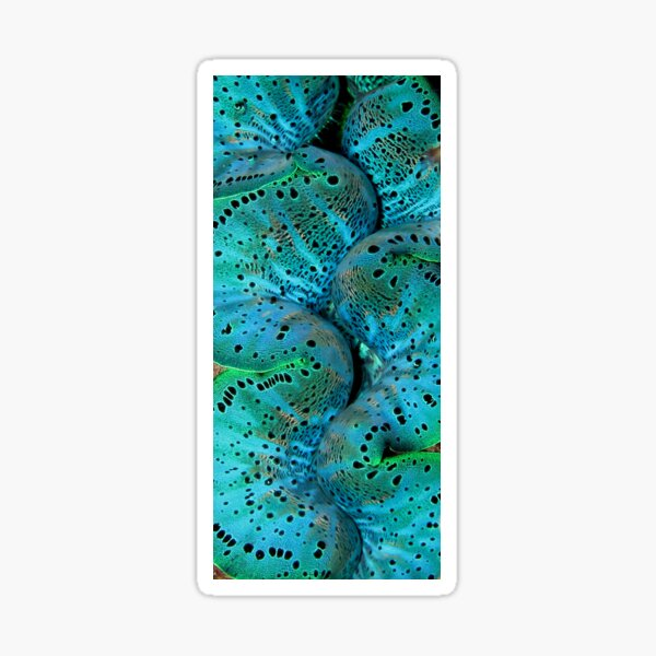 Sinusoidal in Blue Sticker