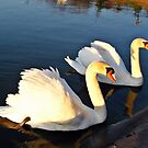 Swans at Sunset by Tracy DeVore