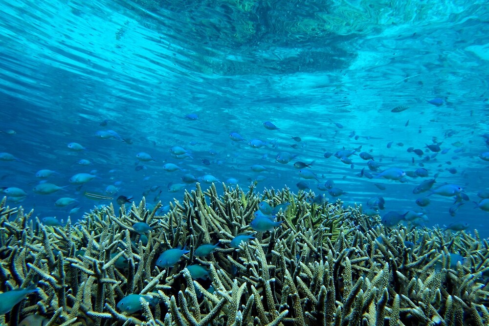 Panavara channel by Reef Ecoimages