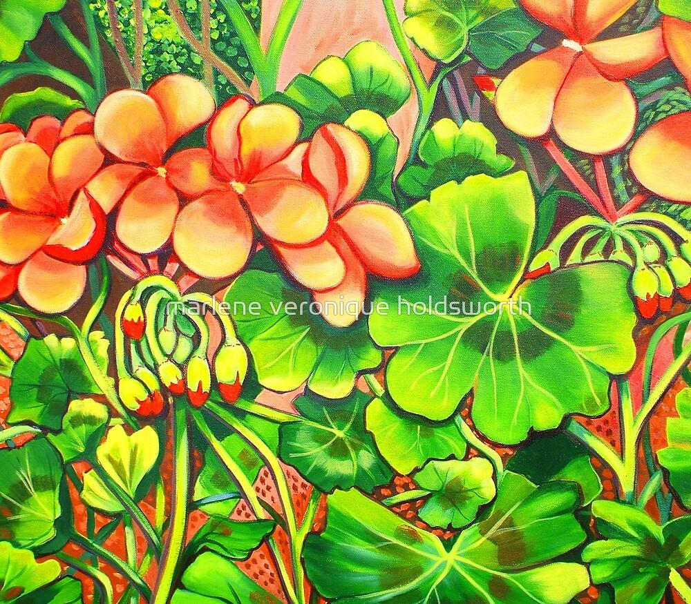 Geraniums by marlene veronique holdsworth