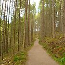 Path To Rogie Falls by Vicki Spindler (VHS Photography)