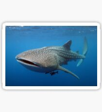 Whale shark Sticker