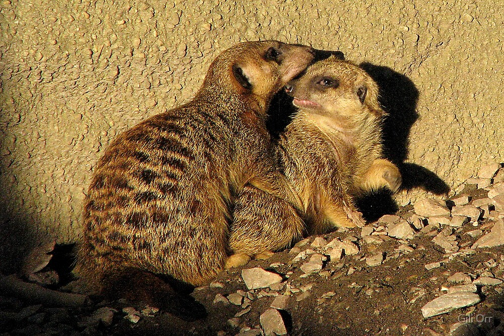 Love is in the air by Gili Orr