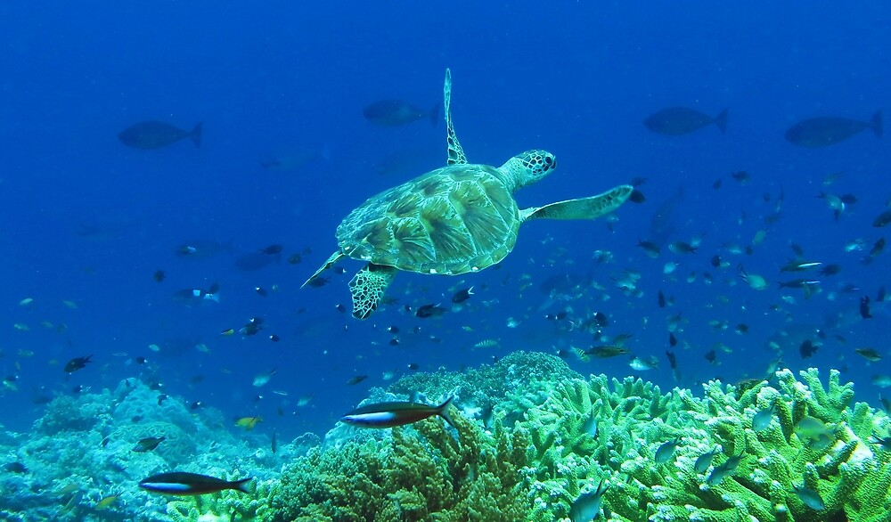 Penyu by Reef Ecoimages