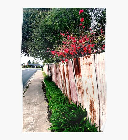 japonica and the rusty fence Poster
