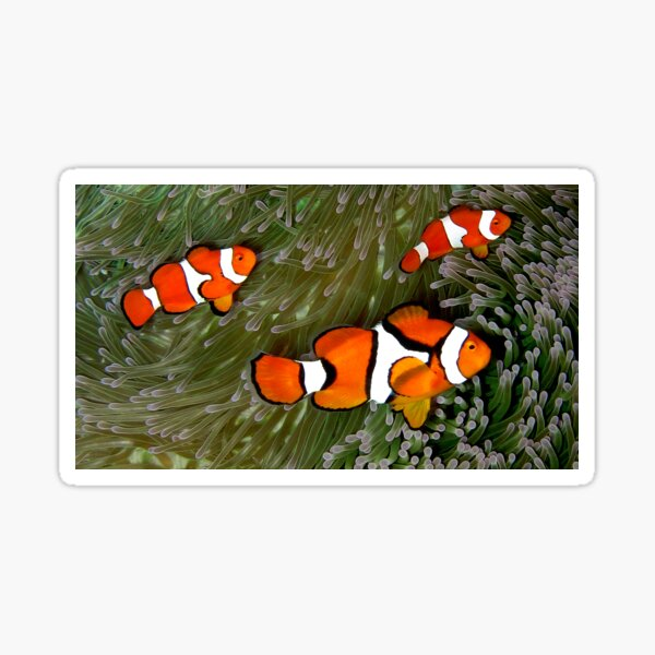 Nemo trio Sticker