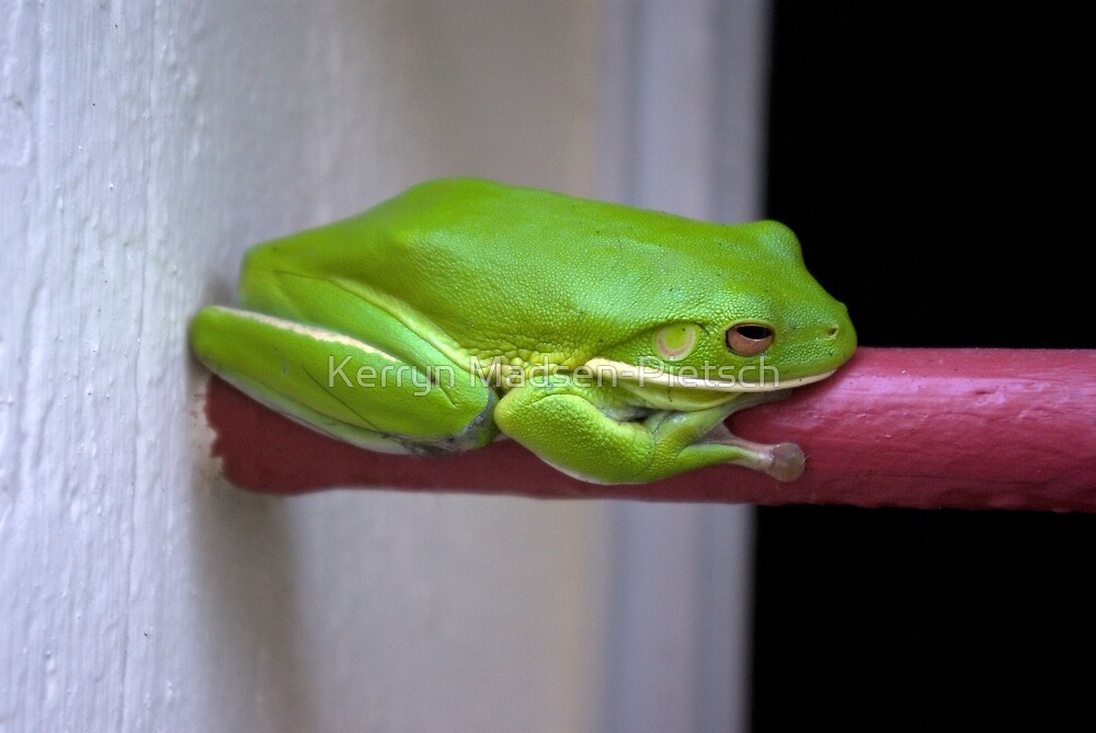 It's Not Easy Being Green by Kerryn Madsen-Pietsch