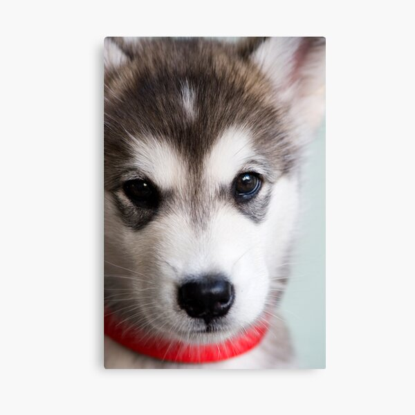I'm so cute! Canvas Print