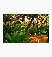 Among the Mangroves Photographic Print