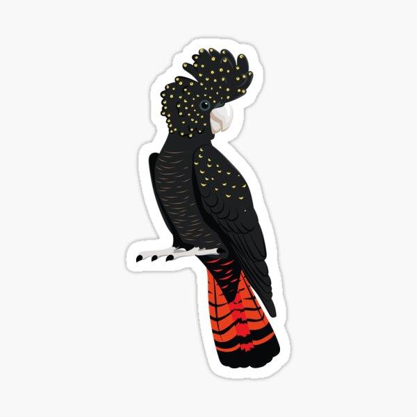 Red-tailed blackcockatoo Sticker