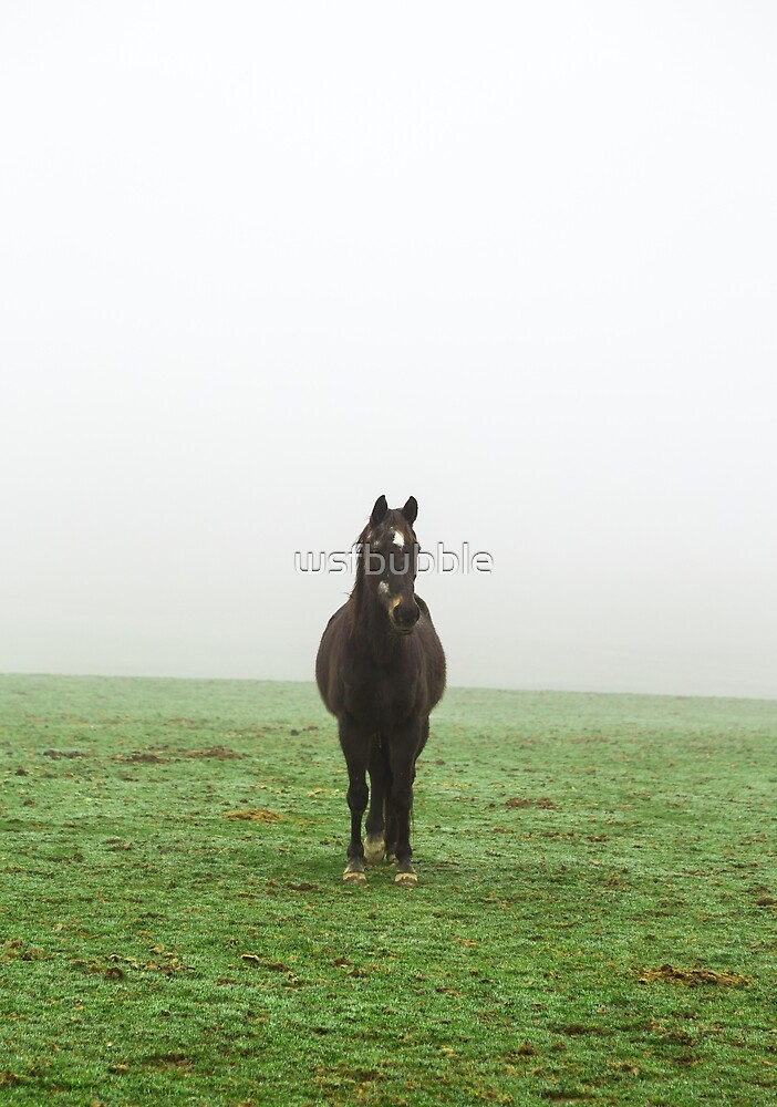 Horse in the mist on a meadow by wsfbubble