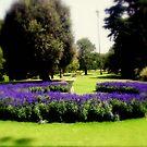 Garden by cjcphotography
