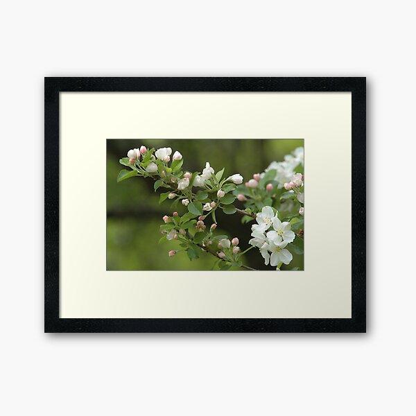 Time for Spring Framed Art Print