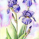Bearded Iris (watercolour on paper) by Lynne Henderson