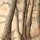Night Woodland (pencil and sepia wash on paper) by Lynne Henderson