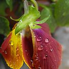 Rain Drops by Tracy Wazny