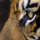 Eye of the Tiger by jackitec