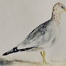 Ring Billed Gull by karenlaurieart