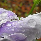 Drops of Soft Purple by Tracy Wazny