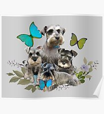Miniature Schnauzer Puppies And Butterflies Friskybizpet Designs Poster