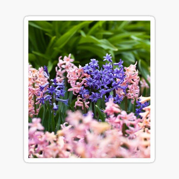 Hyacinth Garden Sticker