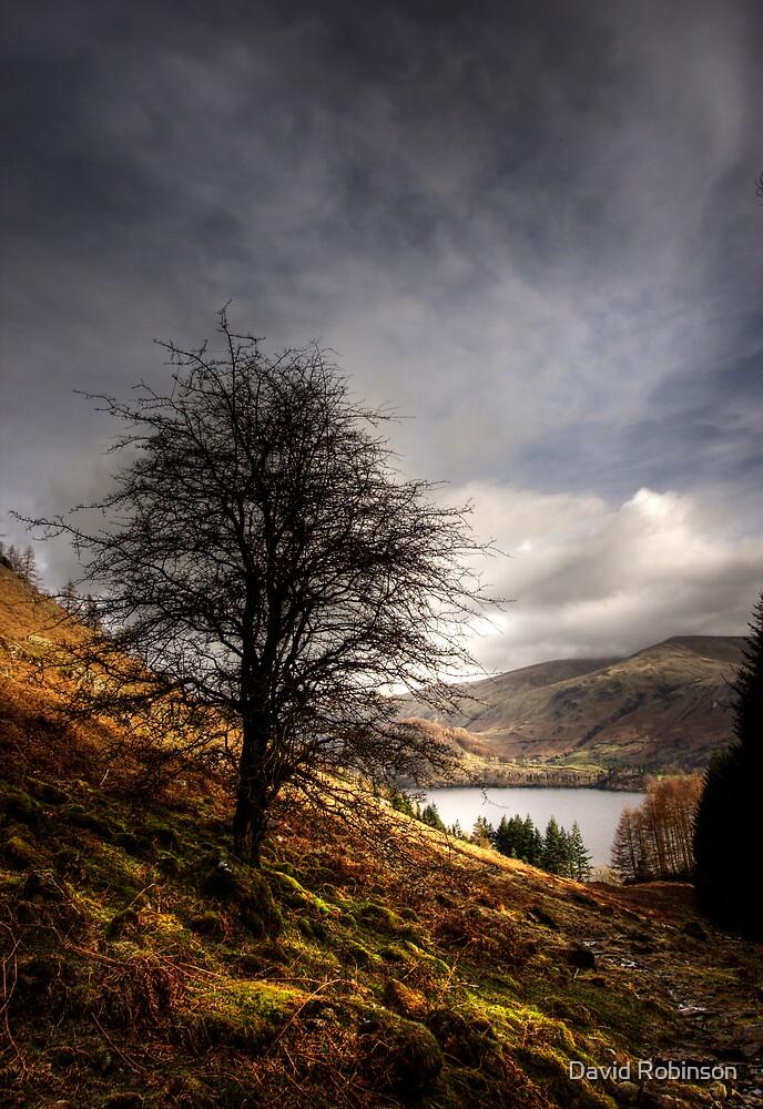 Hawthorn by David Robinson