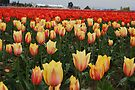 Fabulous Tulips of Spring by Tori Snow