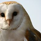 barn owl 2 by sarah hardy