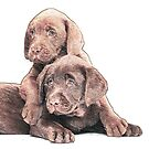 Chocolate Lab puppies by Jackie Popp