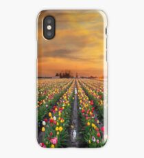Sunset over colorful Tulip flower fields in full bloom spring season in Woodburn Oregon iPhone Case