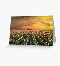 Sunset over colorful Tulip flower fields in full bloom spring season in Woodburn Oregon Greeting Card