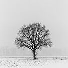 Tree in the snow by pietrofoto