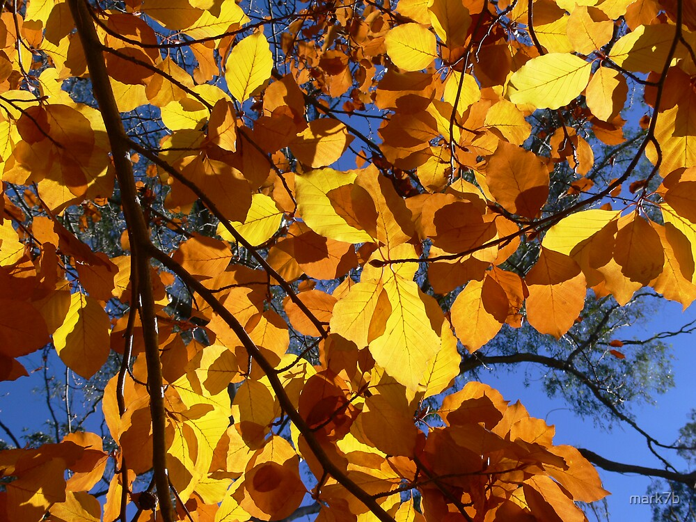 Colour my world with Autumn! by mark7b