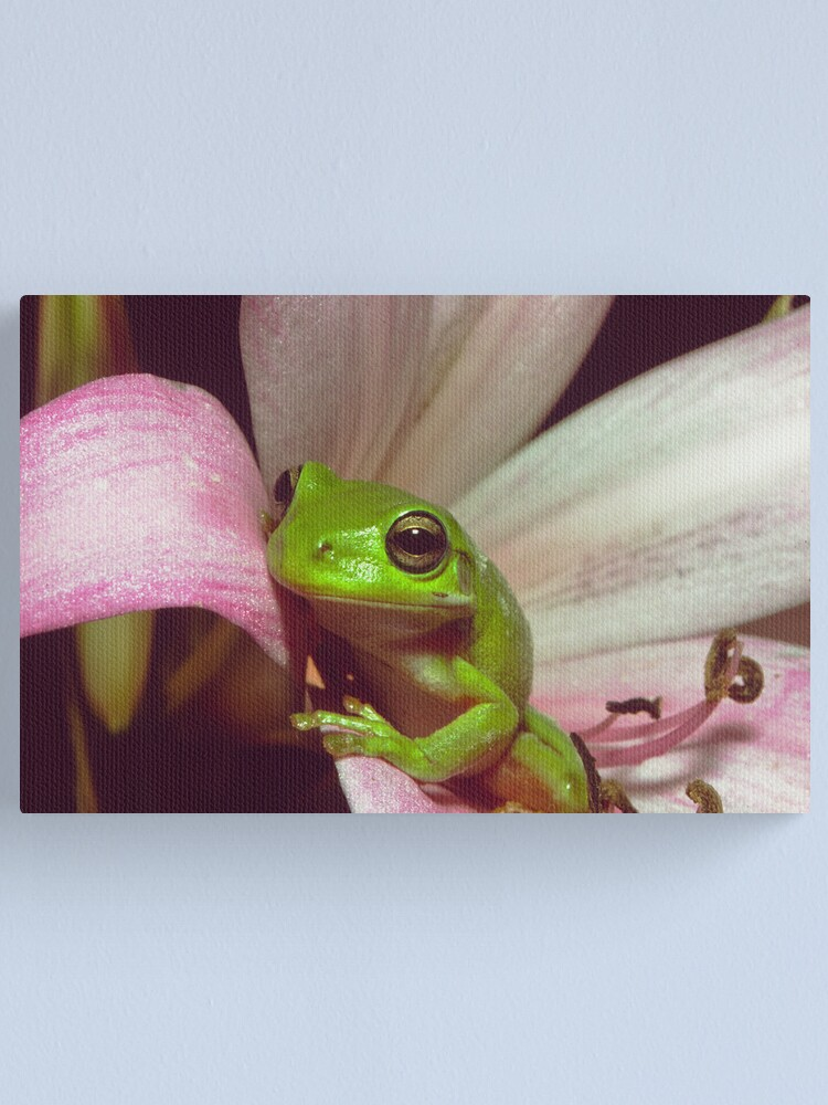 Alternate view of Green Tree Frog Canvas Print