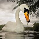 Swan by Patricia Jacobs DPAGB BPE4