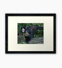 Buffy-Headed Capuchin Monkey Framed Print