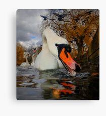 Swan & Birds Canvas Print