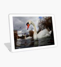 Swans a Swimming  Laptop Skin