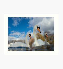 Three Swans Art Print