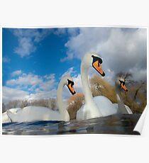 Three Swans Poster