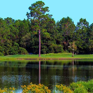 Lynn Haven, Florida USA by crimsontideguy