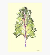 Kale! Photographic Print