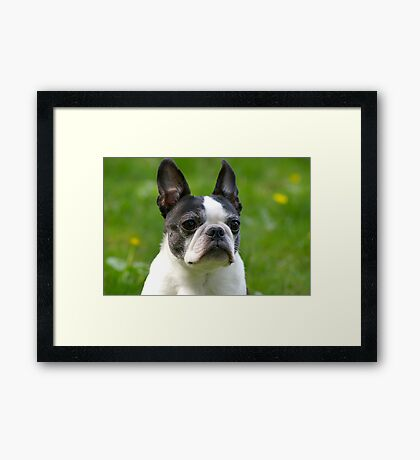 Miss Luci Framed Print