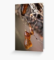 Amber of Damoclese Greeting Card