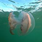 Jellyfish by Andrew Newton