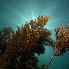 Seaweed and sunrays by Andrew Newton