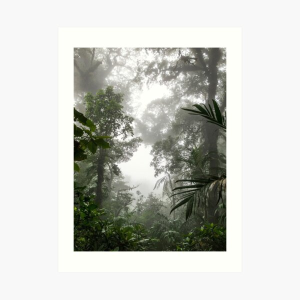Tree silhouettes in the cloudy misty forest, Monteverde, Ecuador Art Print