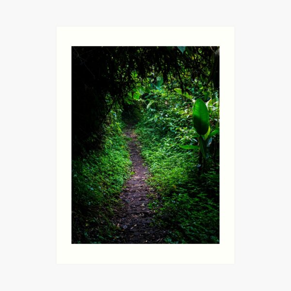 Dark jungle path in the rainforest, Monteverde, Ecuador Art Print