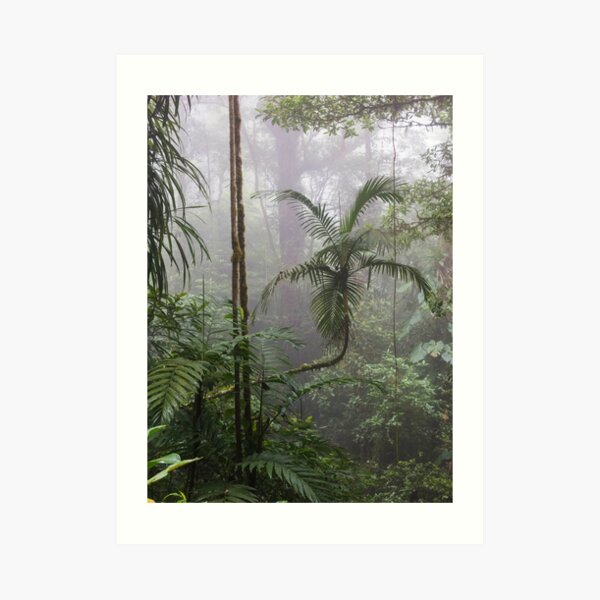 Angled tree branch in jungle cloud forest, Monteverde, Ecuador Art Print
