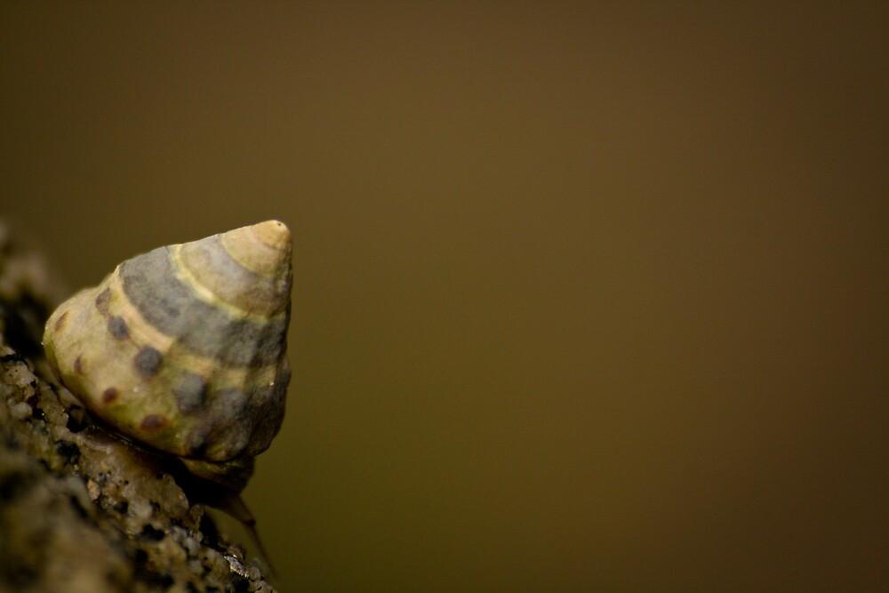 Shell by Nemanja Jovanovic